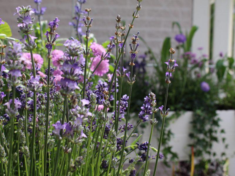 BVB Landscaping bloembak plantenvak plantenbak