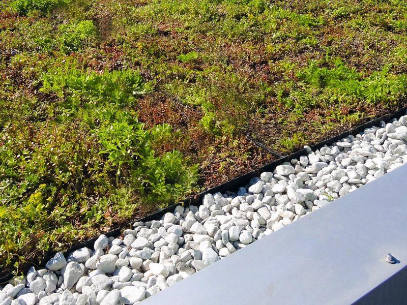 BVB Substrates landscaping daktuin daktuinsubstraat intensief extensief