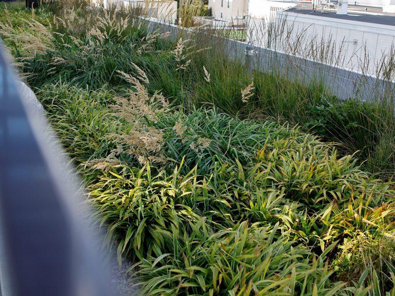 BVB Landscaping openbaar groen daktuin daktuinsubstraat