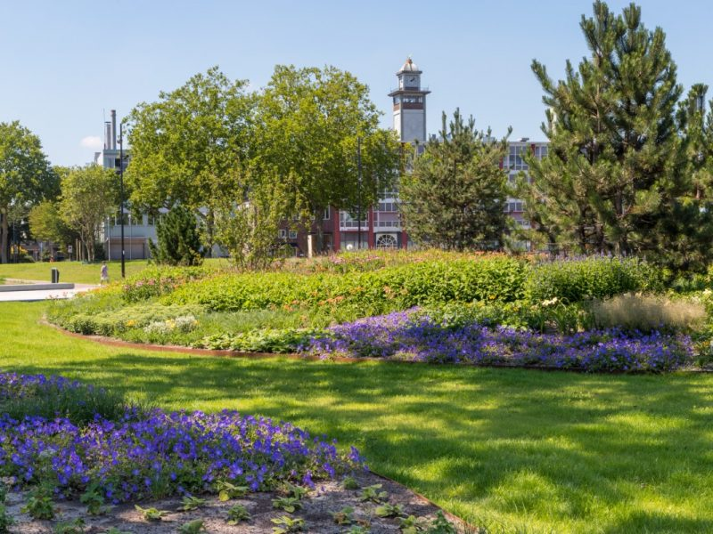 BVB Landscaping substraat vaste planten openbaar groen open grond