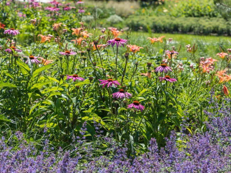BVB Landscaping GreenToColour substraat vaste planten openbaar groen
