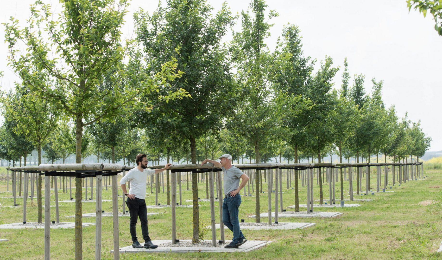 BVB Landscaping bomenproef Amsterdam