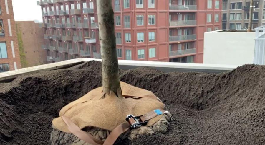 trudo toren aanplant bomen 2
