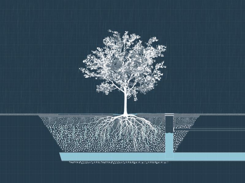 BVB Landscaping Citykross watermanagement openbaar groen ondergrondse groeiplaats substraat stadsbomen